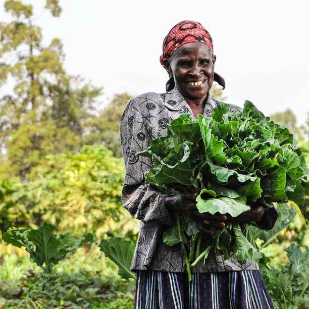 How we make agriculture in developing countries more sustainable