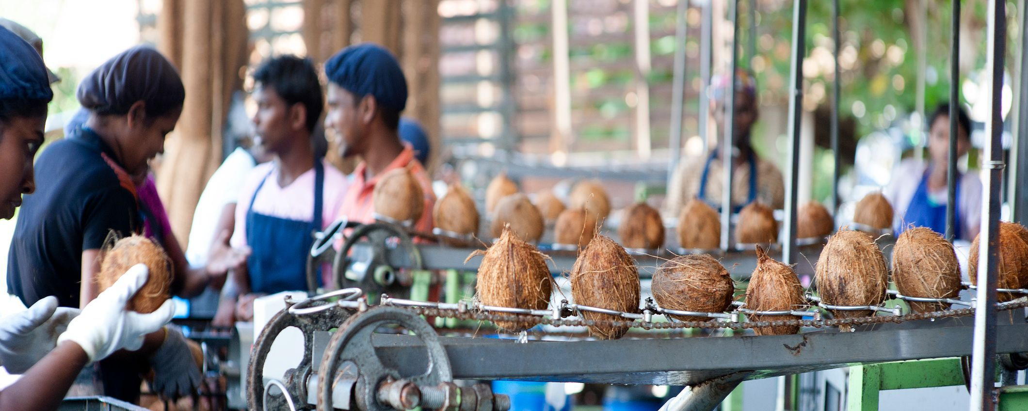 assembly line with coconuts and workers
