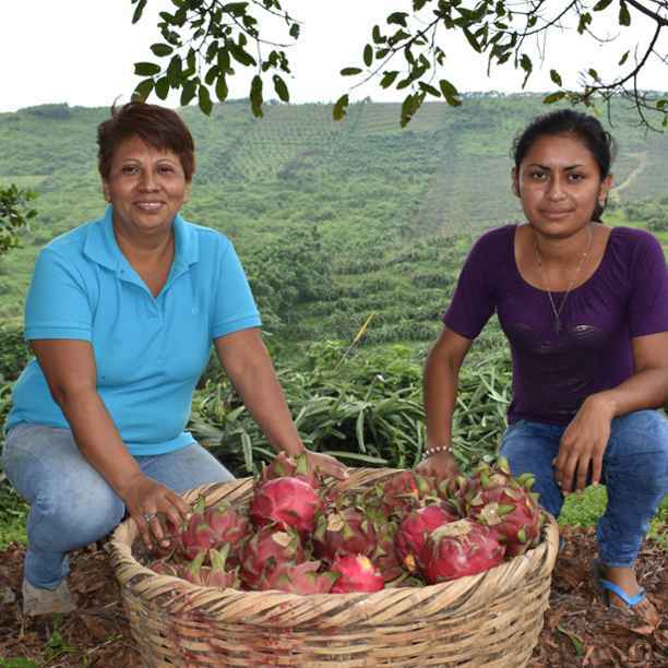 Sol Organica in Nicaragua receives trade finance from Hivos-Triodos Fund